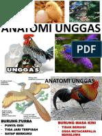 Anatomi Unggas