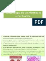 Fisiopatología de La Enfermedad Renal Crónica