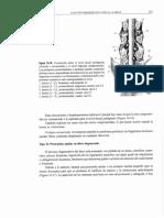 Dr. Miguel G. - Neuroortopedia Clinica (2ª Parte)