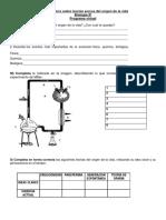 Actividad Evaluativa Quìmica Organica 11ª