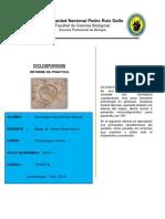 Informe de Ciclosporosis.docx