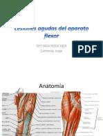 Lesiones Flexores de Mano