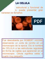 celula-090527231339-phpapp01
