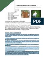 Cecotrofia en Cuyes y Conejos
