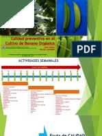Calidad Preventiva en Banano Organico_2015_juan Carlos Rojas Llanque-final Para Exponer