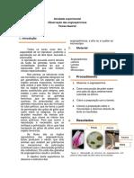 angiospermicas.docx