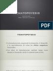 (14) Hematopoyesis[1]