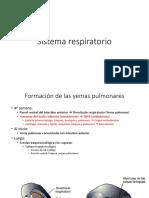 2. Medicina Embriología Sistema Respiratorio
