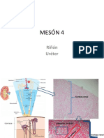 Ppt práctico Urogenital