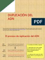 Duplicación ADN