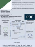 Historia Natural de la Enfermedad - Diarrea Epidémica Porcina