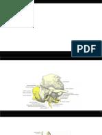 Anatomia Del Temporal