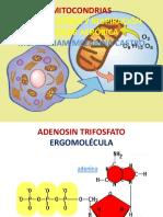 mitocondrias  y respiracion celualr