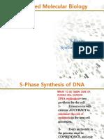 2- S-phase