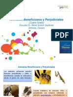 animalesbeneficiososyperjudiciales-120910102650-phpapp02