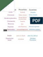 Diferencias Entre Pocariontas y Eucariontas