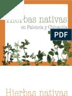 13. Hierbas Nativas en Palencia y Chinautla