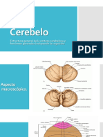 Cerebelo, neurofisiología