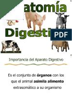 Aparato Digestivo Diapositivas