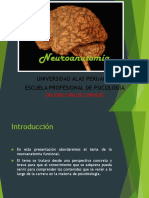 introduccion a la neuroanatomia