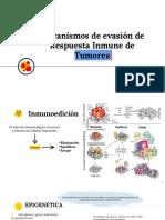 _Mecanismos de Evasion de RI de Tumores (3)