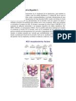 Ciclo Vital Del Virus de La Hepatitis C