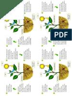 Las Plantas - Matematica