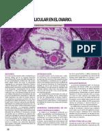 Desarrollo Folicular en El Ovario.