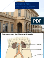 Insuficiencia renal aguda y cronica 2017.ppt