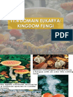 Domain Eukarya [Kingdom Fungi]