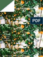 Mi Planta de Naranja-lima Renata