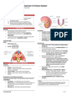 -MircoA- Development of Urinary System - Dr. Vibar