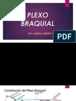 PLEXO BRAQUIAL DIAPOSITIVAS