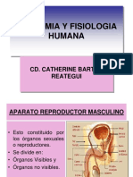 CLASE 12  APARATO REPRODUCTOR MASCULINO.ppt