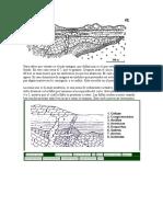 CORTES GEOLOGICOS.docx