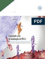 Explorando a via de sinalização do PD-L1