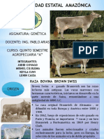 ganado-brown-swiss-GENETICA.pptx