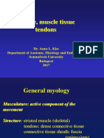 Muscles Tendon Phy i So Therapist
