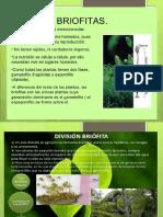 Diapositivas Reino Plantae