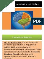 La Neurona y Sus Partes.clase Miercoles