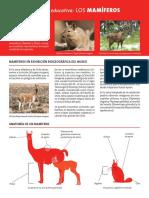 zoología - mamíferos - taxonomía.pdf