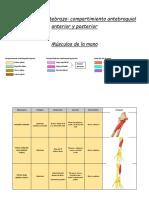 Guia de Musculos 2
