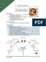 DER-Tema 02-Dermatosis Por Parasitosis Escabiasis, Pediculos