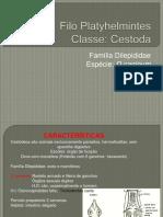 dipilidium VETERINARIA xerox.pdf