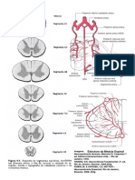 2 Pranchas Neuro