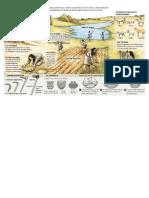 Neolitico Vida Sedentaria