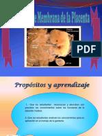 Funcion de Membrana de La Placenta
