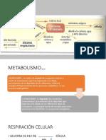 Power Metabolismo