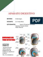embriodigestivo-170730221014