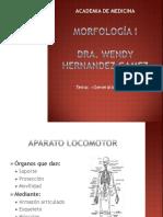 Generalidades de Los Huesos 1